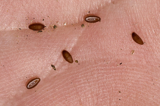 Small brown seeds