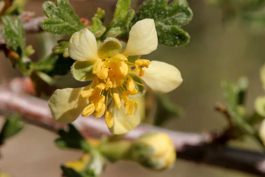 Pale yellow petals of the blossom with brighter yellow stamens