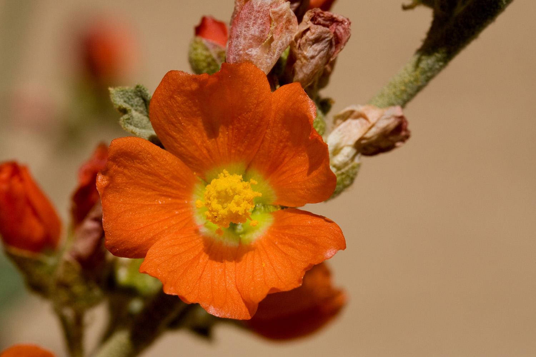 Nmsu Selected Plants Of Navajo Rangelands